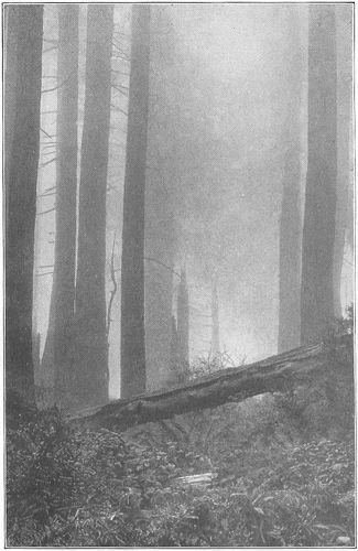 fall forest fog
