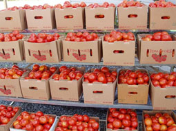 canning-tomatoes-small