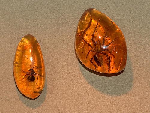 insectsinamber