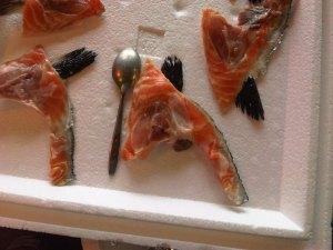 Salmon_Collars_raw